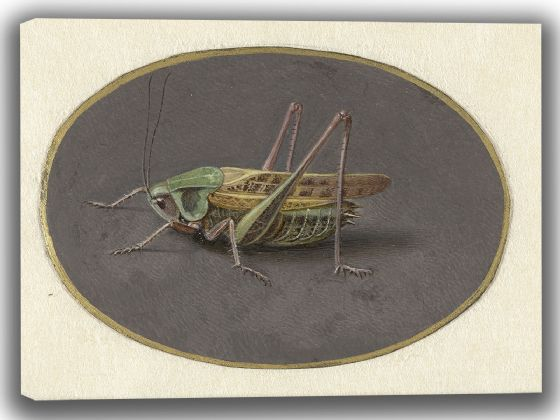 Goes, Jan Augustin van der: Grasshopper. Fine Art Canvas. Sizes: A4/A3/A2/A1 (004068)